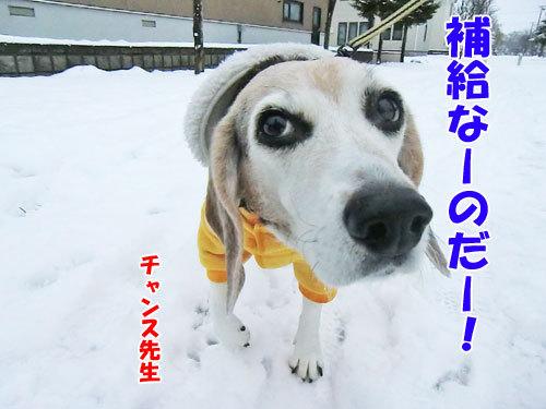 チャンスとティアラ+ココ-20121127-6-500.jpg