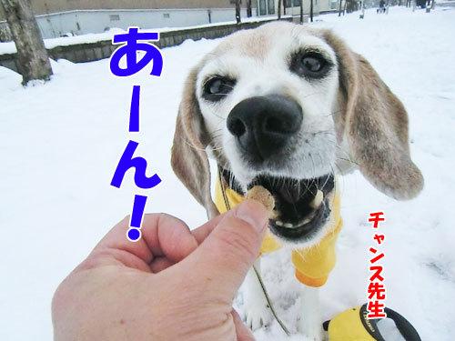 チャンスとティアラ+ココ-20121127-7-500.jpg