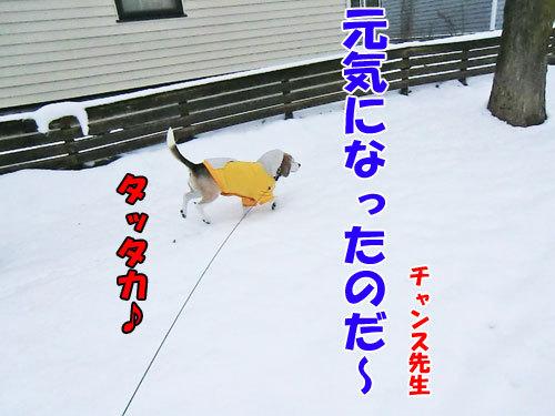 チャンスとティアラ+ココ-20121127-8-500.jpg
