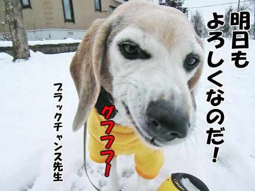チャンスとティアラ+ココ-20121127-9-500.jpg
