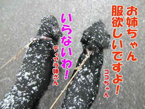 チャンスとティアラ+ココ-20121128-1-500.jpg