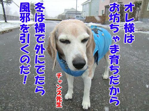 チャンスとティアラ+ココ-20121128-4-500.jpg