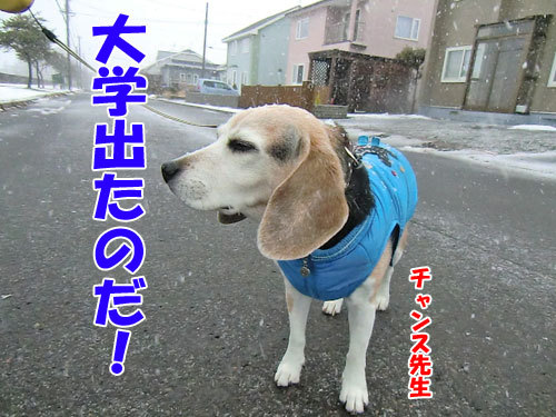 チャンスとティアラ+ココ-20121128-5-500.jpg