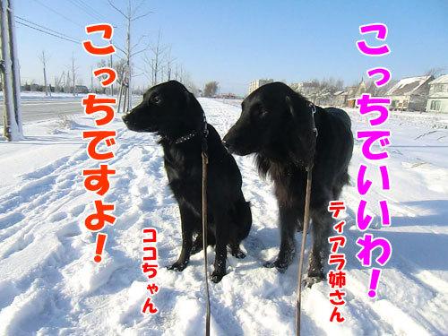 チャンスとティアラ+ココ-20121129-2-500.jpg