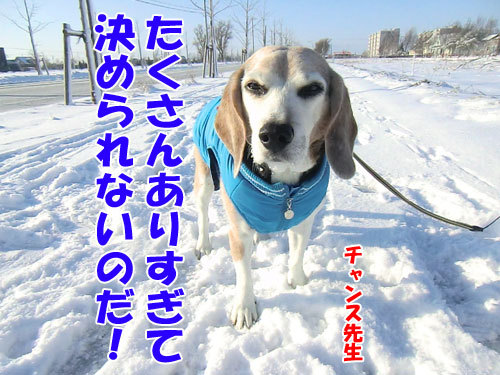 チャンスとティアラ+ココ-20121129-5-500.jpg