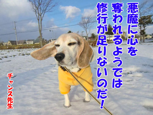 チャンスとティアラ+ココ-20121130-3-500.jpg