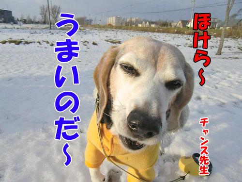 チャンスとティアラ+ココ-20121130-5-500.jpg
