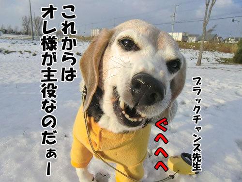 チャンスとティアラ+ココ-20121130-6-500.jpg