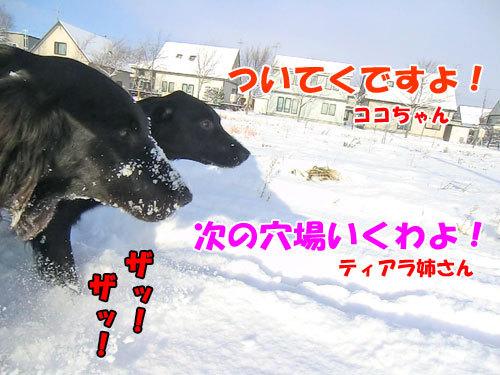 チャンスとティアラ+ココ-20121202-2-500.jpg