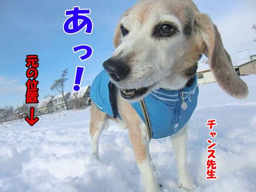 チャンスとティアラ+ココ-20121202-7-500.jpg