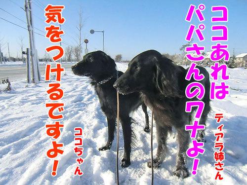 チャンスとティアラ+ココ-20121203-4-500.jpg