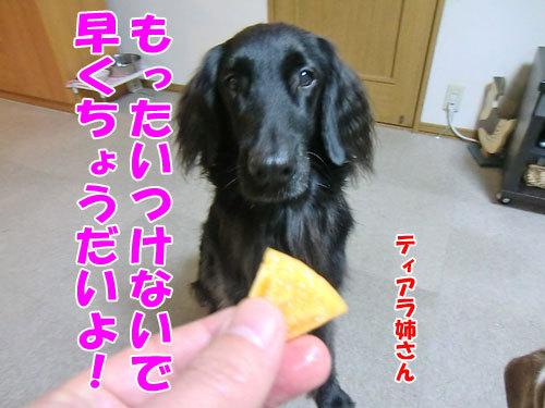チャンスとティアラ+ココ-20121207-5-500.jpg