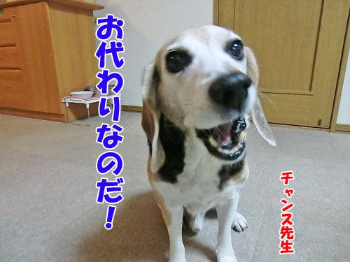 チャンスとティアラ+ココ-20121207-8-500.jpg