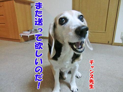 チャンスとティアラ+ココ-20121207-9-500.jpg