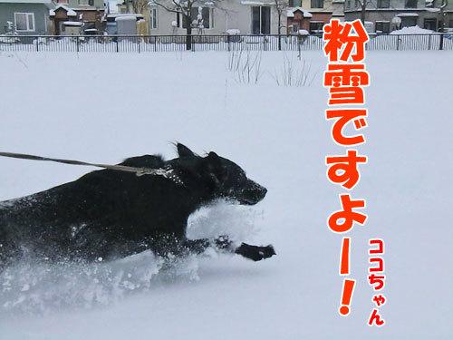 チャンスとティアラ+ココ-20121210-2-500.jpg