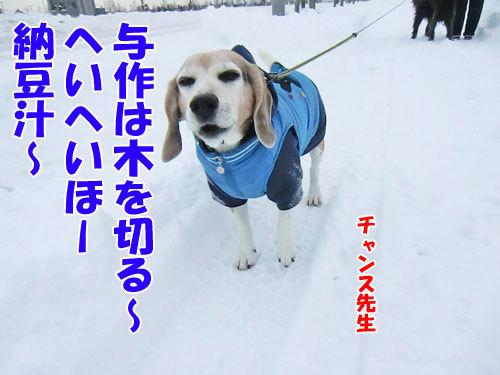 チャンスとティアラ+ココ-20121210-3-500.jpg