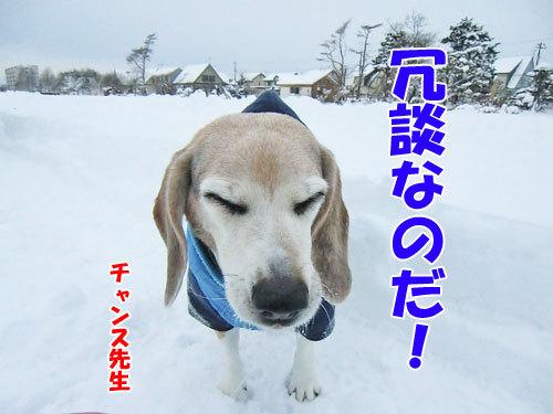 チャンスとティアラ+ココ-20121210-4-500.jpg