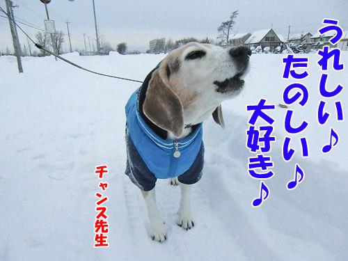 チャンスとティアラ+ココ-20121210-5-500.jpg
