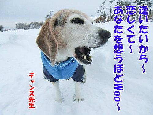 チャンスとティアラ+ココ-20121210-6-500.jpg