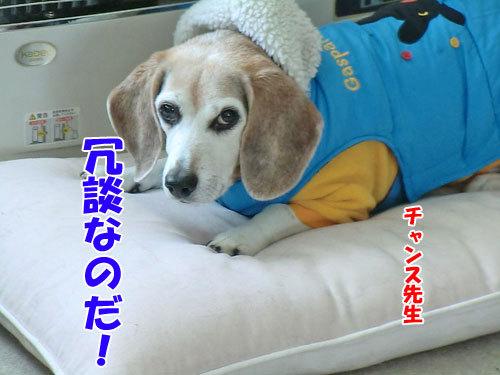 チャンスとティアラ+ココ-20121211-2-500.jpg