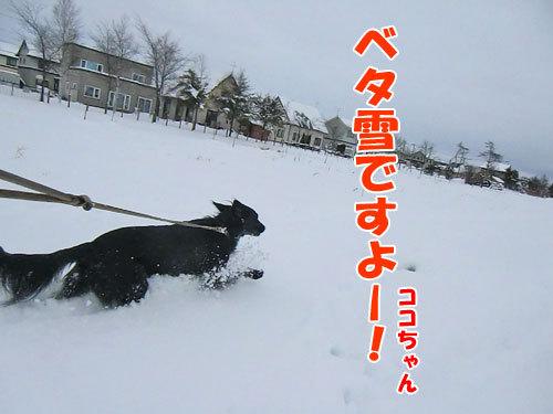 チャンスとティアラ+ココ-20121211-3-500.jpg