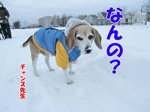 チャンスとティアラ+ココ-20121211-4-500.jpg