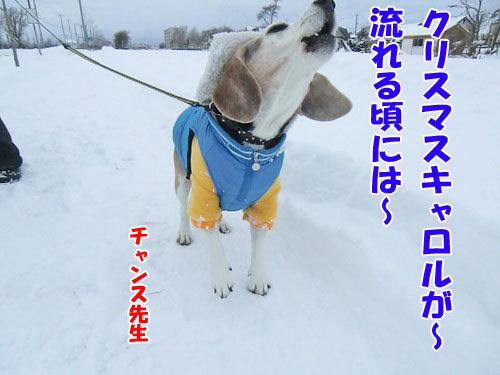 チャンスとティアラ+ココ-20121211-5-500.jpg