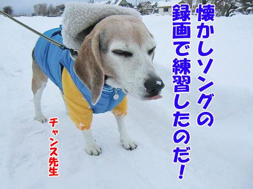 チャンスとティアラ+ココ-20121211-6-500.jpg