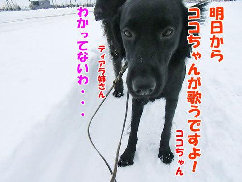 チャンスとティアラ+ココ-20121211-8-500.jpg