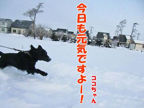 チャンスとティアラ+ココ-20121212-1-500.jpg
