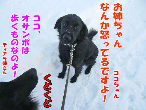 チャンスとティアラ+ココ-20121212-2-500.jpg