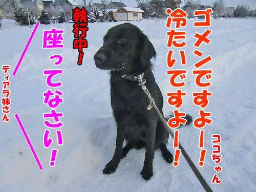 チャンスとティアラ+ココ-20121212-4-500.jpg