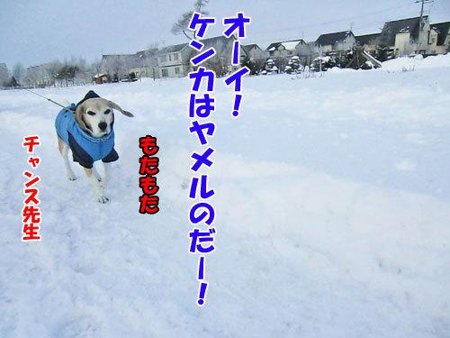 チャンスとティアラ+ココ-20121212-5-500.jpg