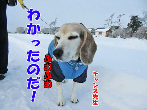 チャンスとティアラ+ココ-20121212-6-500.jpg