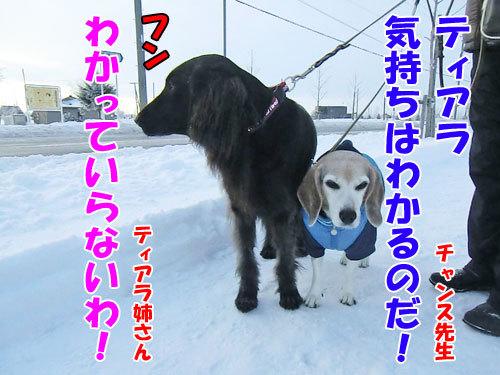 チャンスとティアラ+ココ-20121212-7-500.jpg