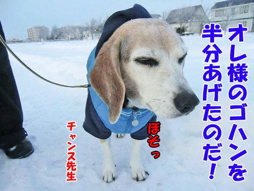 チャンスとティアラ+ココ-20121212-9-500.jpg