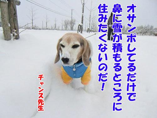チャンスとティアラ+ココ-20121213-5-500.jpg
