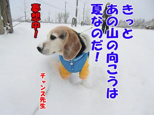 チャンスとティアラ+ココ-20121213-6-500.jpg