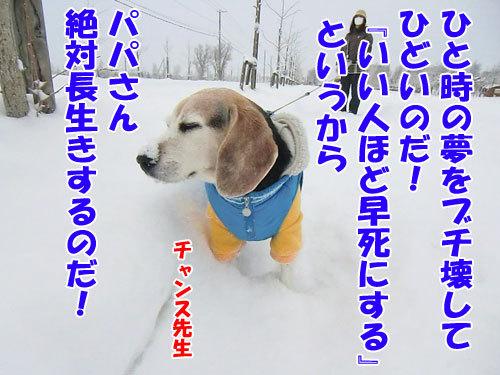 チャンスとティアラ+ココ-20121213-7-500.jpg