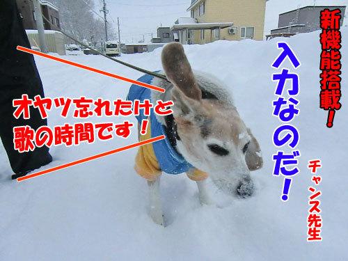 チャンスとティアラ+ココ-20121214-1-500.jpg