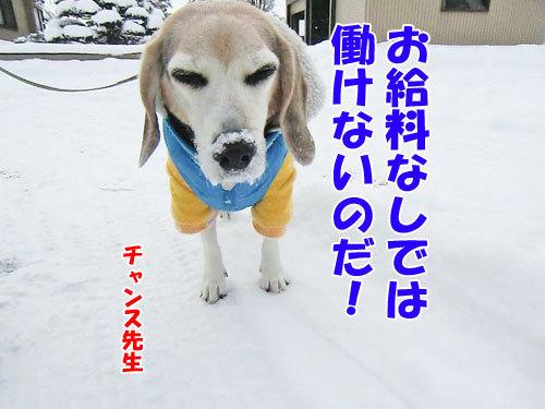 チャンスとティアラ+ココ-20121214-3-500.jpg