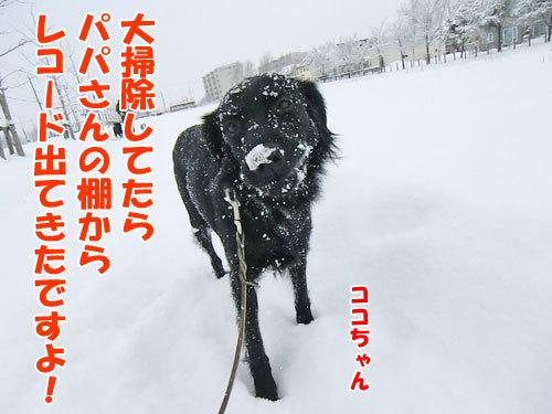 チャンスとティアラ+ココ-20121214-5-500.jpg
