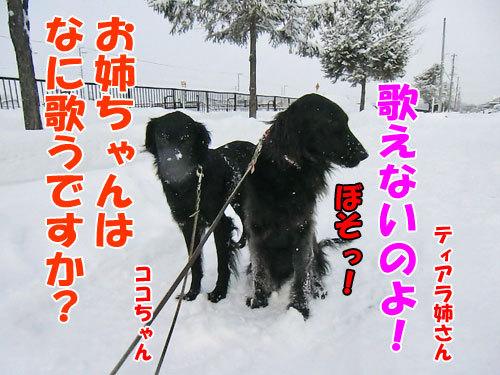 チャンスとティアラ+ココ-20121214-6-500.jpg