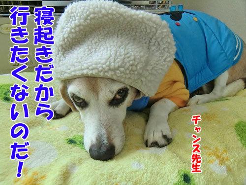 チャンスとティアラ+ココ-20121215-3-500.jpg
