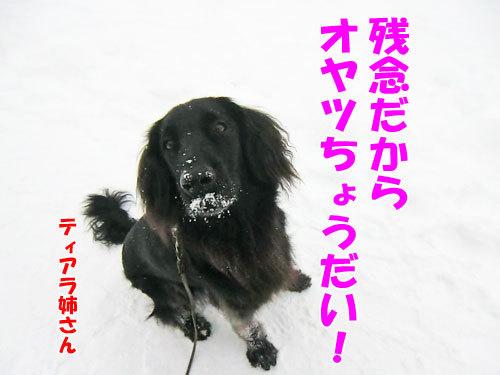 チャンスとティアラ+ココ-20121215-5-500.jpg