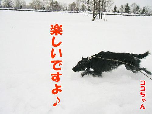 チャンスとティアラ+ココ-20121215-6-500.jpg