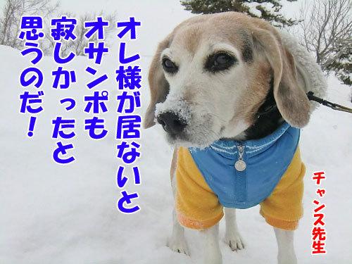 チャンスとティアラ+ココ-20121215-8-500.jpg