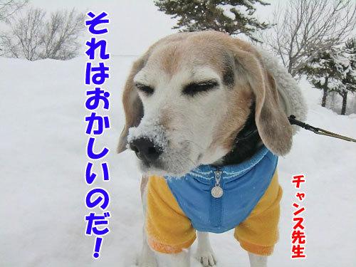 チャンスとティアラ+ココ-20121215-9-500.jpg