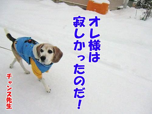チャンスとティアラ+ココ-20121215-10-500.jpg