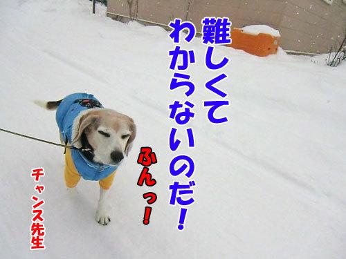 チャンスとティアラ+ココ-20121215-11-500.jpg